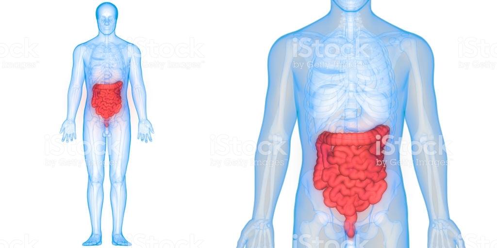 Intestines & Intestinal flora
