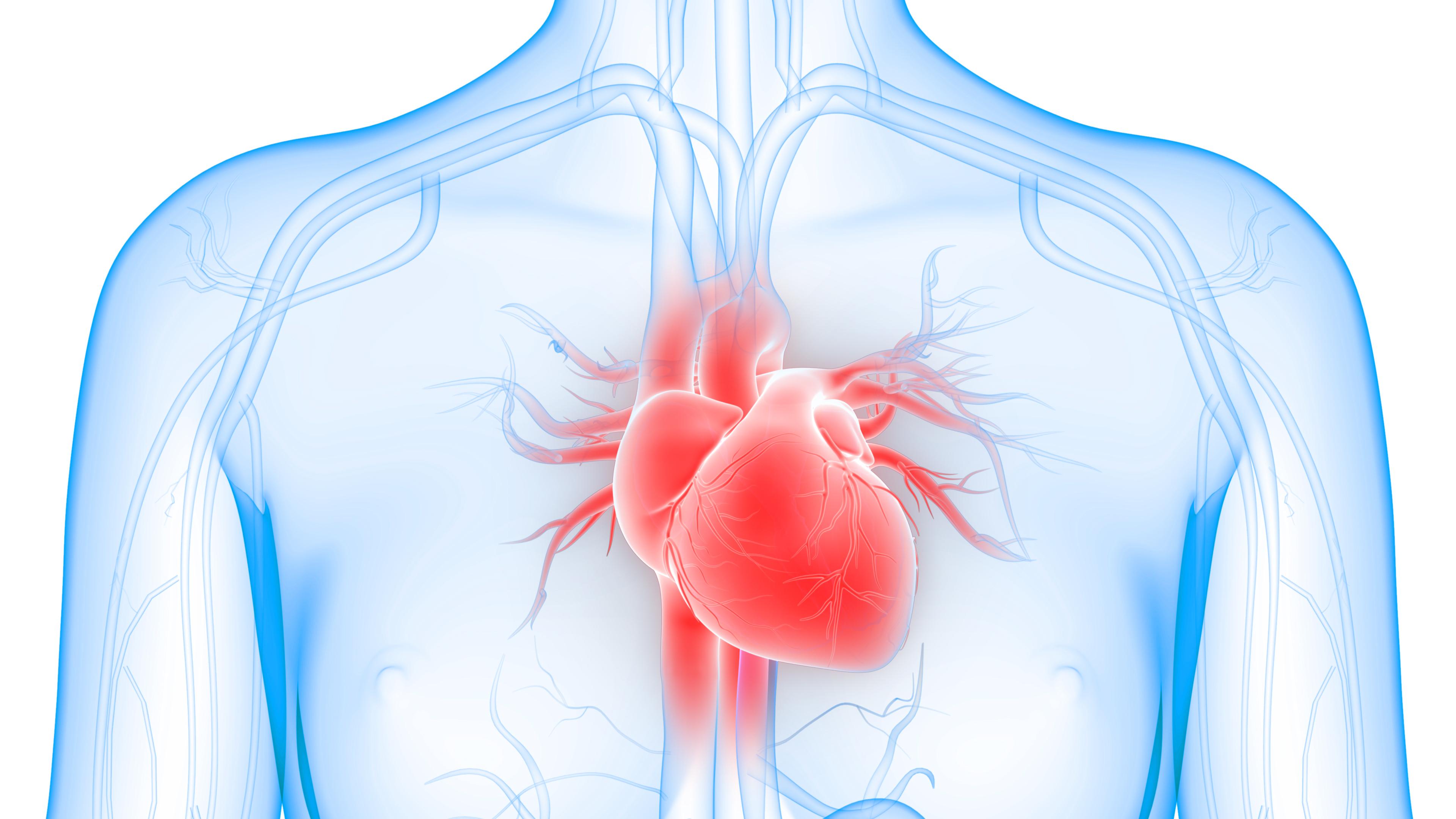 Heart & blood vessels