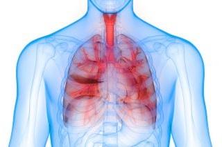 Lungs & Trachea