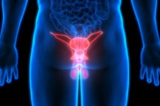 Prostate & Testicles