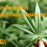 Activate and optimize your endogenous cannabis system